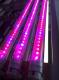 20W LED пура Т8 за оранжерия